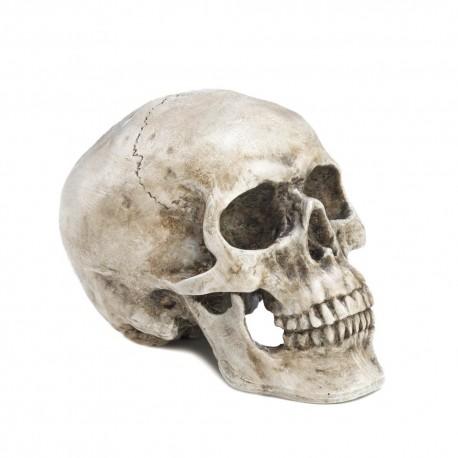 Decorative Skull Head
