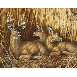 Tin Sign DU- Hideaway - Deer